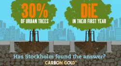 One in three new trees planted in urban environments dies within its first year