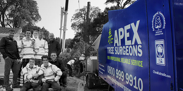 Apex Tree Surgeons Team Photograph