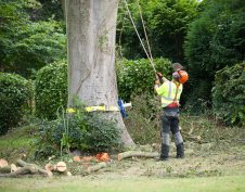 Apex Tree Surgeons Gallery Images