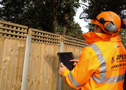 Tree Surgeon Consultancy