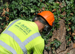 Tree Surgeons Emergency Callout