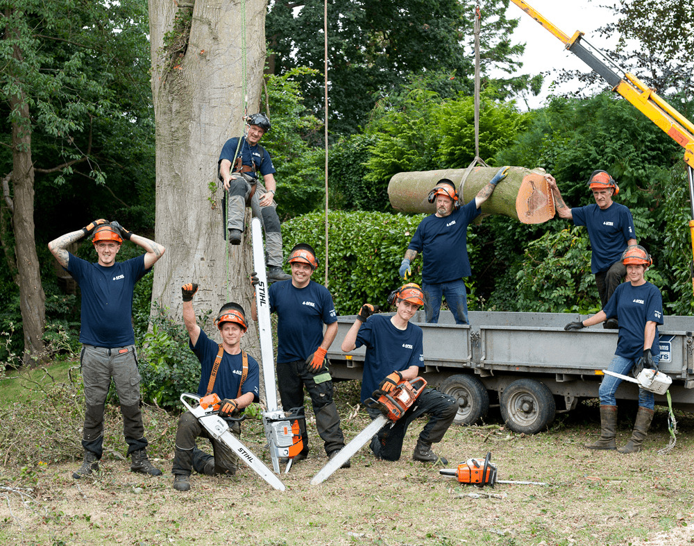 Image result for tree surgeon